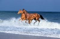 2 Horses Sea Fine-Art Print