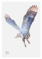 Snow Owl II Fine-Art Print
