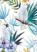 Cackatoo Fine-Art Print