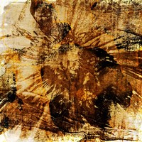 Poppy Gold II Fine-Art Print