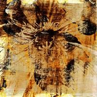 Poppy Gold III Fine-Art Print