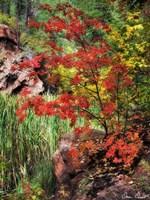 Peaceful Woods I Fine-Art Print