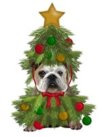 English Bulldog, Christmas Tree Costume Fine-Art Print