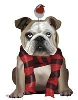 English Bulldog, Scarf and Robin Fine-Art Print