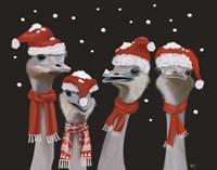 Ostrich, Christmas Gals Fine-Art Print