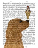 Cocker Spaniel, Golden, Ice Cream Fine-Art Print