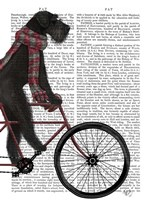 Schnauzer on Bicycle, Black Fine-Art Print