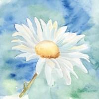 Daisy Sunshine II Fine-Art Print