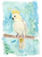 Sweet Tropical Bird II Fine-Art Print