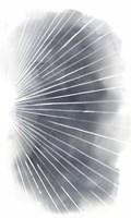 Rays II Fine-Art Print