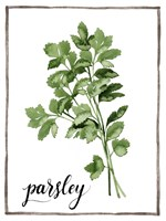 Watercolor Herbs II Fine-Art Print