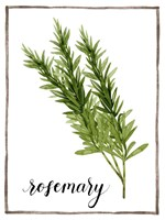 Watercolor Herbs V Fine-Art Print