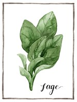 Watercolor Herbs VI Fine-Art Print