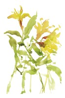 Watercolor Lilies I Fine-Art Print