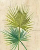 Fan Palm Fine-Art Print