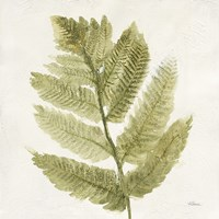Forest Ferns I Fine-Art Print