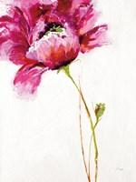 Big Red Blossom on White Fine-Art Print