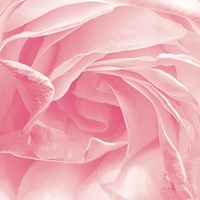 Georgia Pink Fine-Art Print