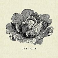 Linen Vegetable BW Sketch Lettuce Fine-Art Print
