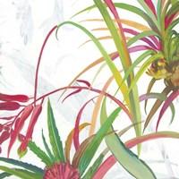Tropical II Fine-Art Print