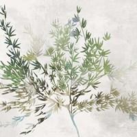 Olive Branch Fine-Art Print