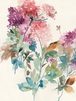 Sweet Hydrangea I Framed Print