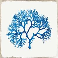 Blue Coral II Framed Print