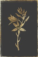 Botanical Gold on Black I Fine-Art Print