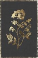 Botanical Gold on Black II Fine-Art Print