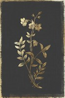 Botanical Gold on Black IV Fine-Art Print
