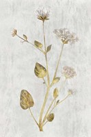 Botanical Gold on White I Fine-Art Print