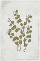 Botanical IV Fine-Art Print