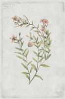 Botanical V Fine-Art Print