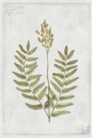 Botanical VI Fine-Art Print
