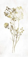 Gold Botanical II Fine-Art Print