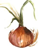 Onion Framed Print