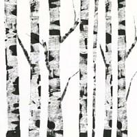 White Birch Fine-Art Print