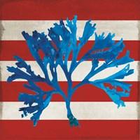 Marine Coral II Fine-Art Print