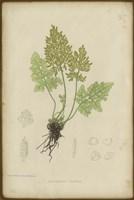 Roots Fine-Art Print