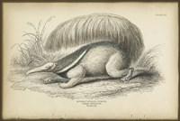 Great Anteater Fine-Art Print