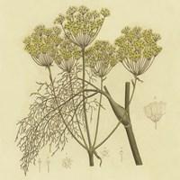 Yellow Weeds Fine-Art Print