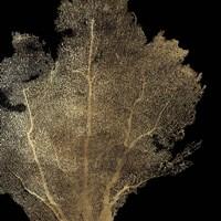 Honeycomb Coral I Fine-Art Print