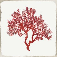 Red Coral II Fine-Art Print