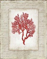 Red Coral II Border Fine-Art Print