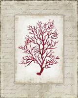 Red Coral III Border Fine-Art Print