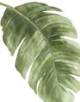 Palm Green II Fine-Art Print