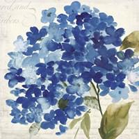 Hampton Hydrangea II Fine-Art Print