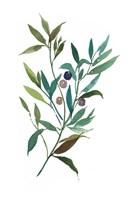 Olive I Fine-Art Print