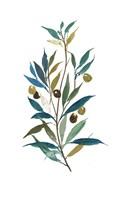 Olive II Fine-Art Print
