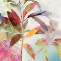 Charlotte I Fine-Art Print